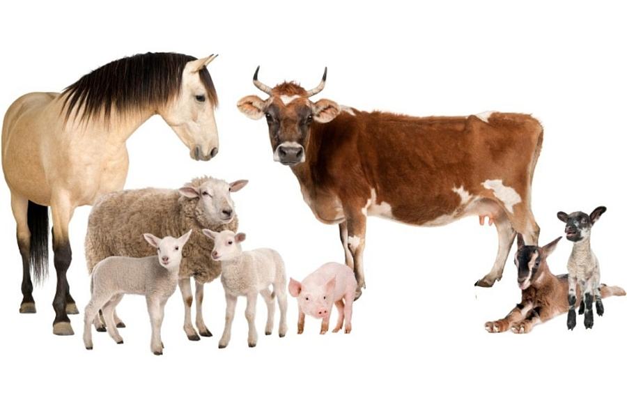 Schnelltestsysteme zur Diagnostik direkt in der Tierarzt-Praxis oder vor Ort im Stall